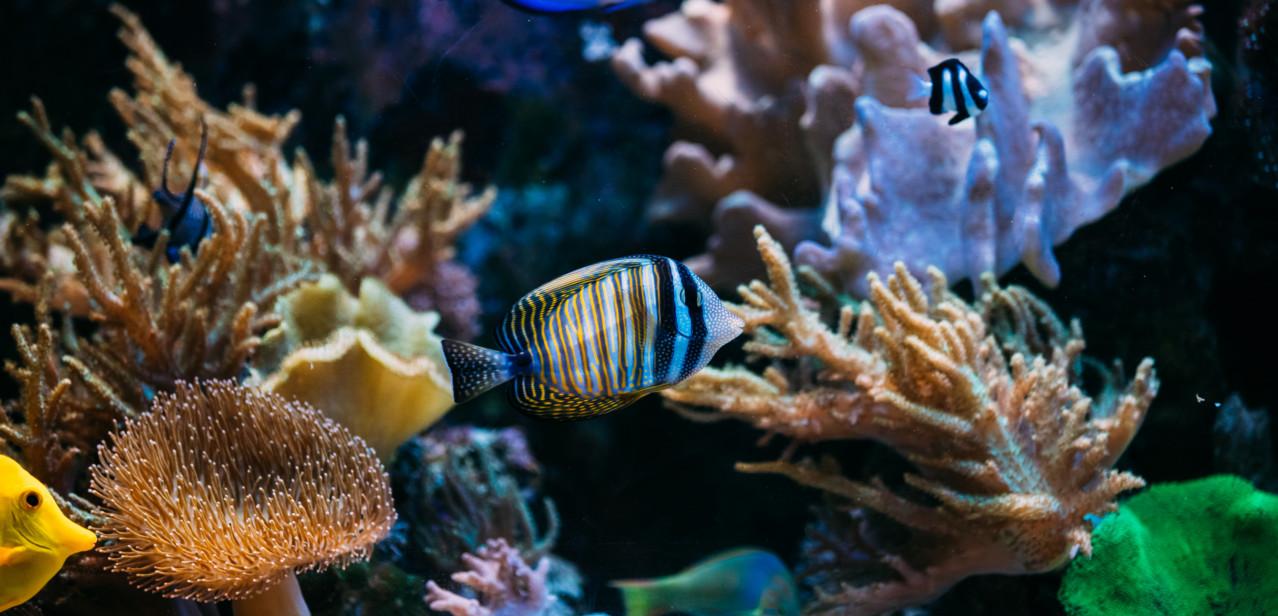 Custom Aquarium Designs and Installation